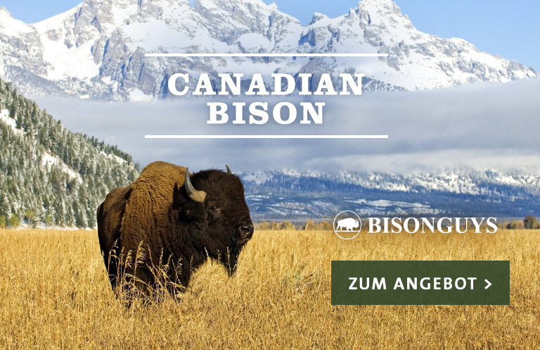 Canadian Bison