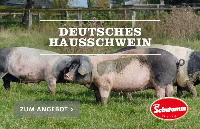 Deutsches Hausschwein Schwein