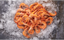 Crevetten